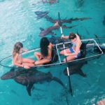 Swim with sharks at Compass Point kkerzner 1
