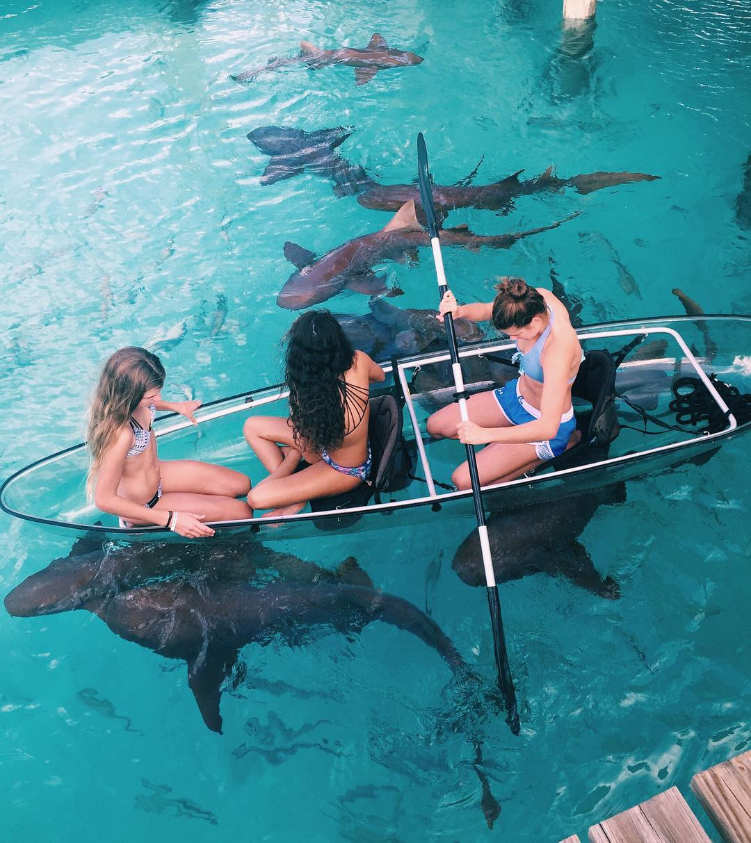 Bucket List: You must swim with these Sharks